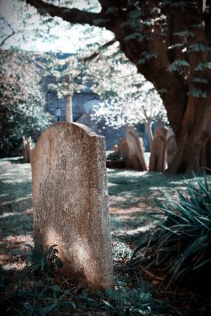 churchyard: grave on churchyard under tree, peaceful graveyard in the sun in England, Folkestone