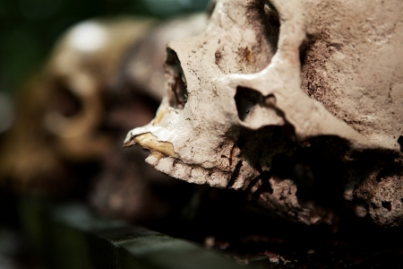 cranium: skeleton skull human sacrifice creepy dead person cranium