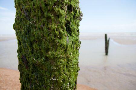 groyne: Beach or coast at Winchelsea in england sussex with view of groyne wood pillars