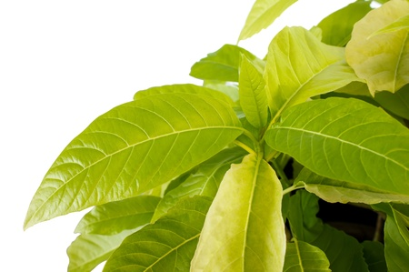 green leaf plant nature pattern Stock Photo