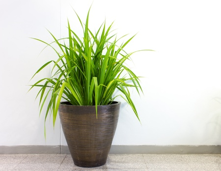 indoor plants: plant decoration in office building Stock Photo