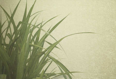 plant decoration in office building vintage background Stock Photo - 22152683