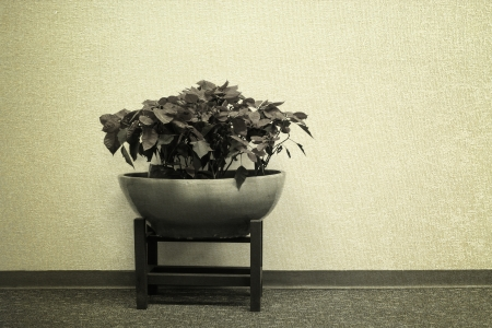 plant decoration in office building vintage background Stock Photo - 22152666