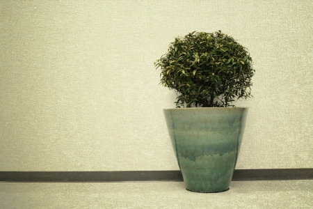 plant decoration in office building vintage background Stock Photo - 22152671