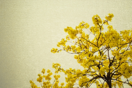 big branch plant with round fluffy yellow flowers photo