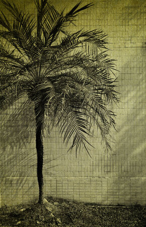 vintage picture white wall empty interior with a palm photo