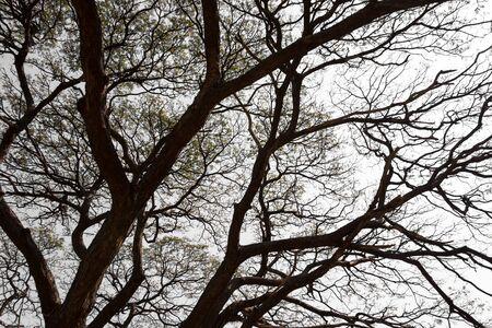 branching: Branching off. Organic White Background