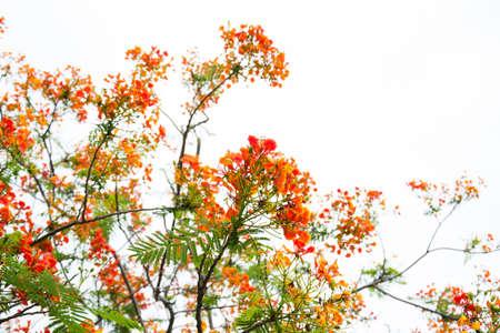 Very beautiful spring tree