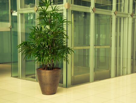 carpeting: Office corridor with palm trees in pots, carpeting and glass walls, vintage color style