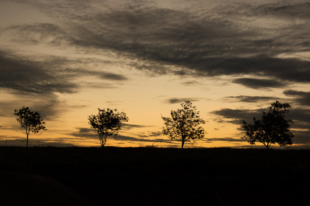 sunup: Colorful sunset with tree silhouette.