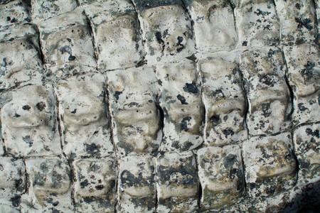 the Crocodile skin texture. Shot in South Africa.