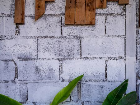 The Green leaves on the white brick wall background