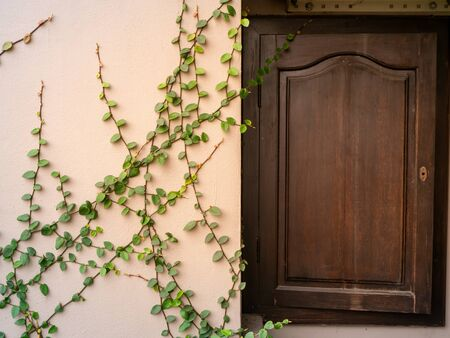 The  vine elegantly hangs, climbs, densely covers a stone, light brown wall around a wooden, brown window with bars on it Imagens