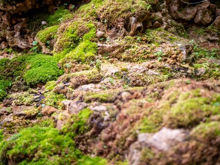 fern and moss and little plant growing on tree and rock Stock fotó