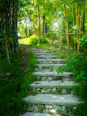 Beautiful pathway in a park in summer, Landscape with scenic winding footpath in sunlight. Stone overgrown path in sunny garden