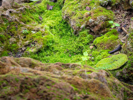 fern and moss and little plant growing on tree and rock