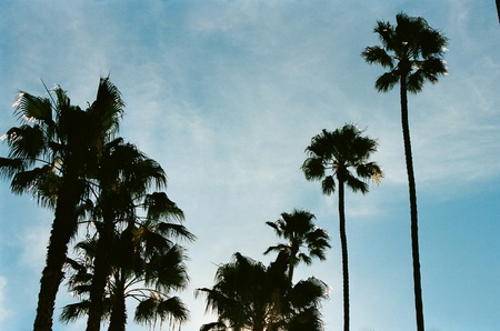 Palm trees reaching for the sky