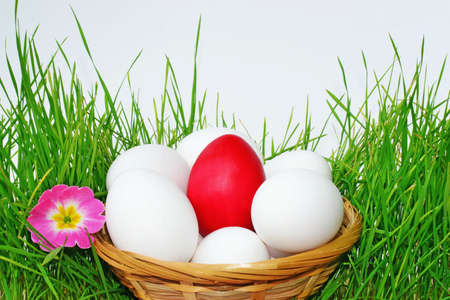 Red and white Easter eggs is a basket placed in the grass  photo