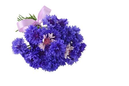 bachelor s button: Blue cornflower bouquet - Centaurea cyanus isolated on white background  Stock Photo