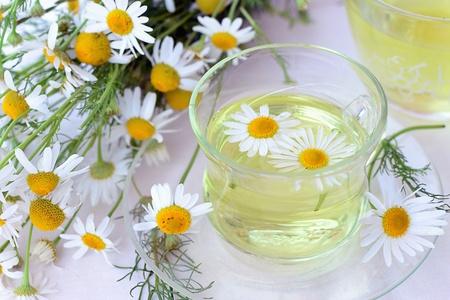matricaria recutita: Tisana di camomilla in tazza di vetro e fiori di camomilla freschi