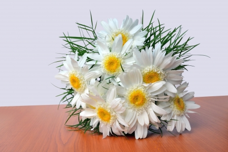 shasta daisy: Shasta Daisy bouquet - Leucanthemum x superbum  Fluffy white daisies, also called Crazy daisies, on the table