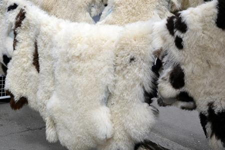 sheepskin: Natural sheep and lamb fur, sheepskin on display at the market