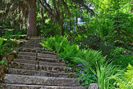 Stone  stairway in the forest surrounded by lush vegetation. photo
