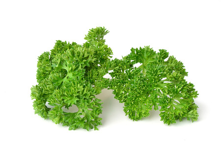 Fresh green curly parsley isolated on white background