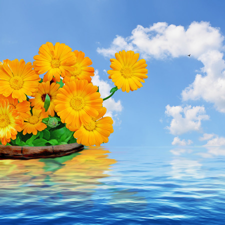 Orange flowers, blue sky with white clouds and water. photo