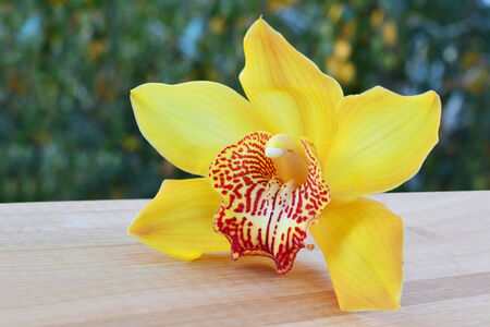 Yellow cymbidium orchid flower over wooden table photo