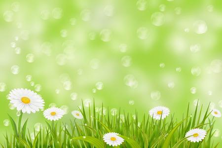 p�querette: Spring background avec de l'herbe, des marguerites et des feux de bokeh.