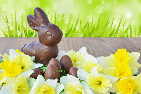chocolate eggs: Easter background, chocolate bunny, chocolate eggs, daffodils on wooden background.