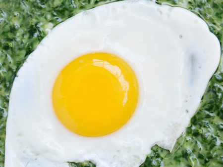 creamed: Sunny side up egg with creamed spinach closeup. Stock Photo