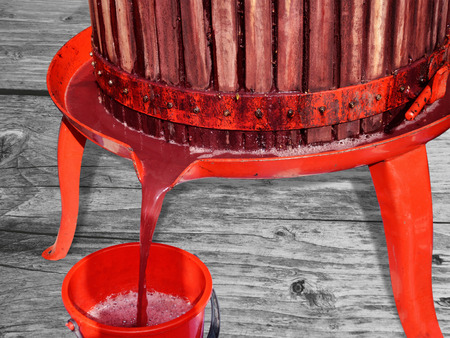 Fresh red grape juice is flowing into a bucket from a basket press.