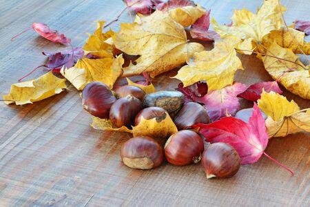 castanea sativa: Sweet chestnuts (Castanea sativa) and autumn leaves on wooden background.
