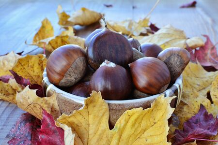 castanea sativa: Sweet chestnuts (Castanea sativa) in a bowl over wooden table with autumn leaves.