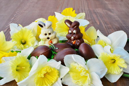 Ostern-Hintergrundschokoladenhäschen, Schokoladeneier, die durch Narzissenblumen umgeben werden Standard-Bild - 50964006