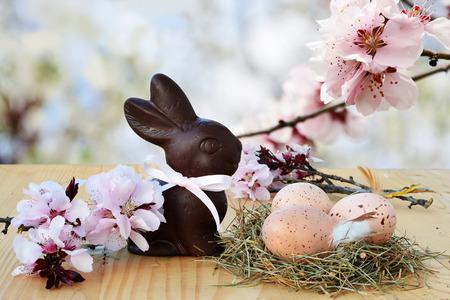 osterei: Ostern Hintergrund, Karte mit Ostereier im Nest, Schokoladenhasen und rosa Frühlingsblüten im Hintergrund.