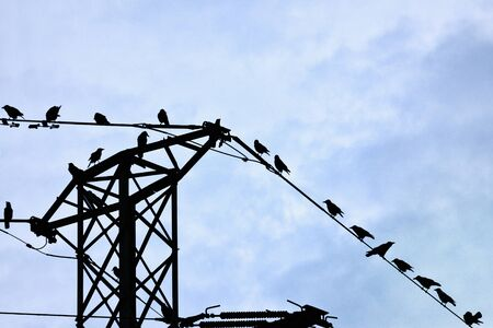 Rook (Corvus frugilegus) perched on power lines tower Stock Photo