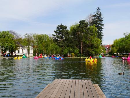 fibra de vidrio: CLUJ-NAPOCA, RUMANIA - 17 DE ABRIL DE 2017: La gente se relaja en los barcos de placer y tiene tiempo de calidad que pedalea barcos del cisne en el lago en Central Park.