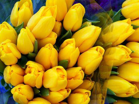 Bunch of yellow tulips arrangement