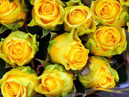 Limbo yellow green roses at the florist Фото со стока