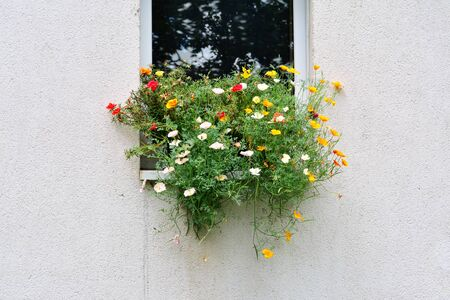 Flowers in windowsill of an exterior wall with copy space Reklamní fotografie