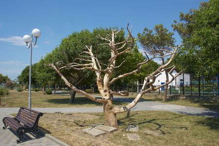 Kind on the dried up tree in park Stock Photo - 4718858