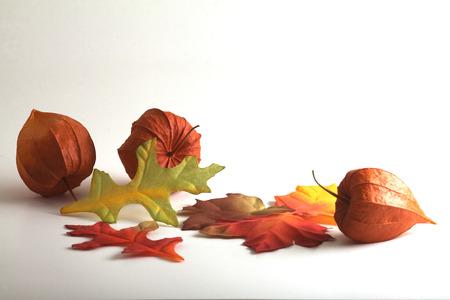 alkekengi: Lantern plants and autumn fabric leaves