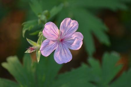 Flower backlit Imagens