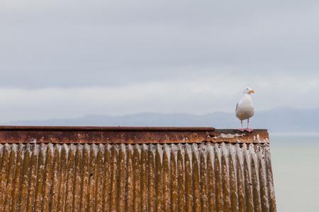 Bird Waiting Stok Fotoğraf