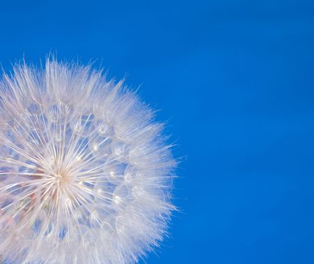Closeup of a flower seedball against a blue background.