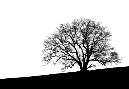 solitary tree: Black and white silhouette of a beautifully shaped and very intricately detailed tree sitting at the crest of a hill. Stock Photo