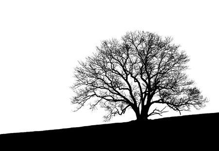 silhouette arbre hiver: Noir et blanc, la silhouette d'une belle forme et tr�s intimement d�taill�e arbre assis � la cr�te d'une colline.